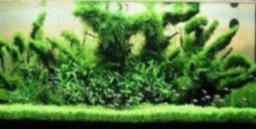 ALFOMBRAS PLANTADAS Y TRONCOS PLANTADOS.